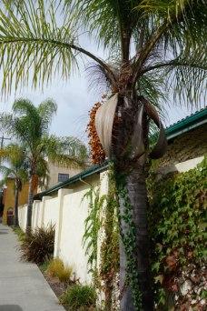 palmharvest1