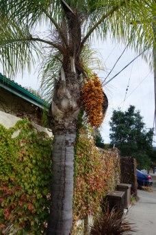 palmharvest3