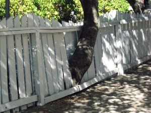 treenfence2