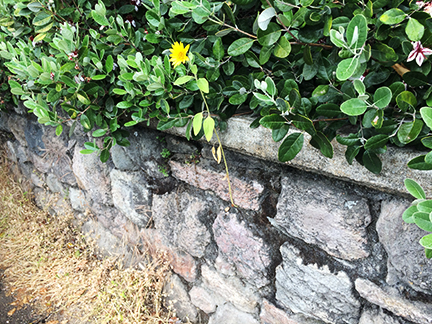 wallflower1 copy