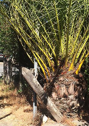 palmvpost1